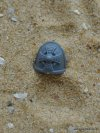 SPACE MARINE VANGUARD SHOULDER PAD A