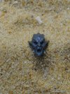DARK ELVES WITCH ELF HEAD E