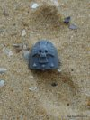 SPACE MARINE VANGUARD SHOULDER PAD C