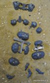 TYRANID TOXICRENE/MALECEPTOR ACCESSORIES/CLAWS ETC